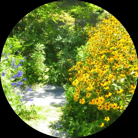 写真:北川村「モネの庭」 で黄色い花の咲く景色