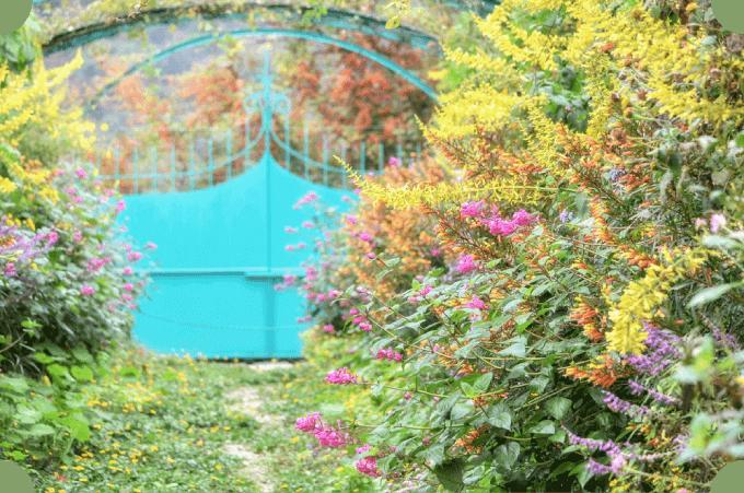 画像:11月の花の庭。咲き乱れる秋の花々の奥にグリーンの「モネの門」が見える。