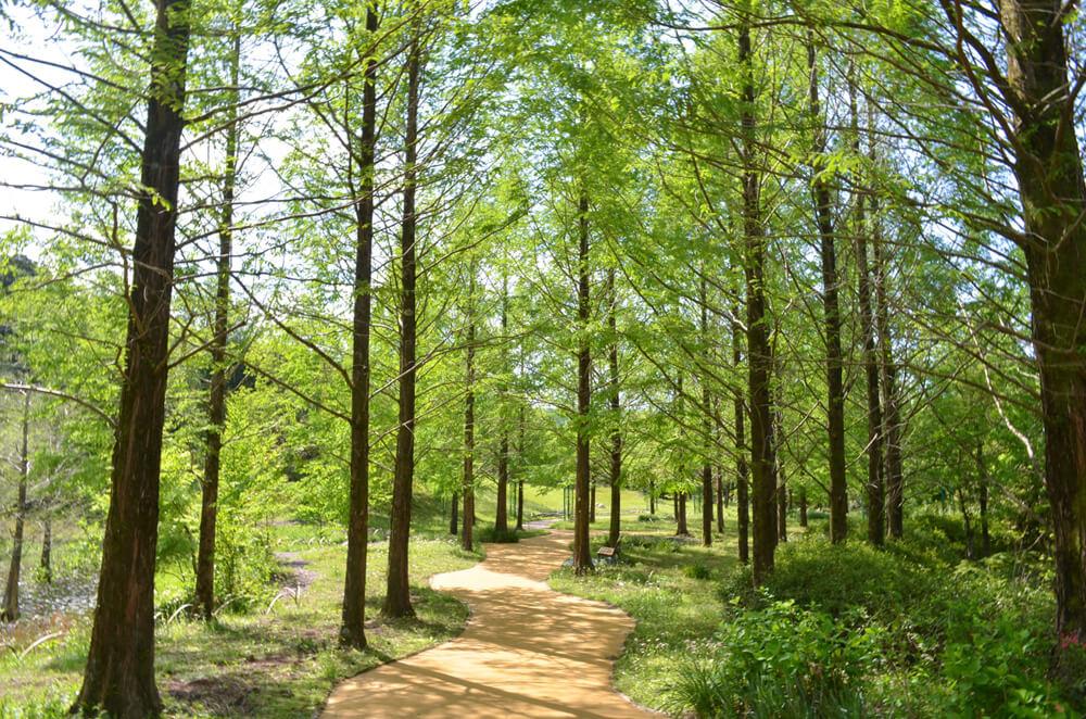写真:緑がさわやかな木々に囲まれた小道。