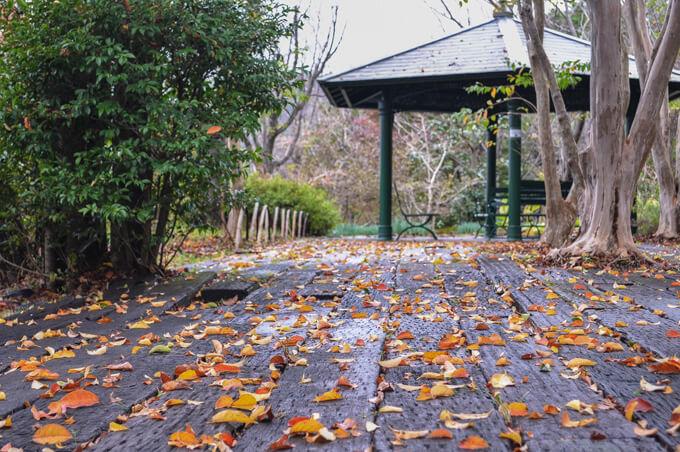 画像:落ち葉に彩られたウッドデッキ