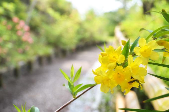 画像:道端の花