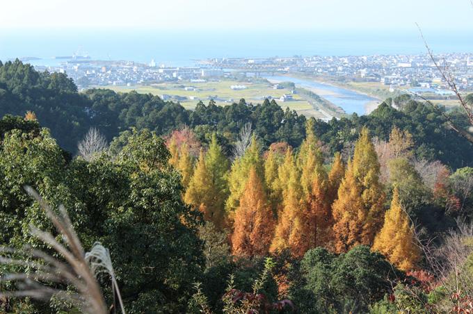 画像:紅葉する山の木々